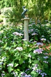 Hydrangeas, Pamel Goode