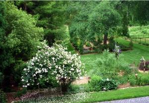 Tree Garden 2012