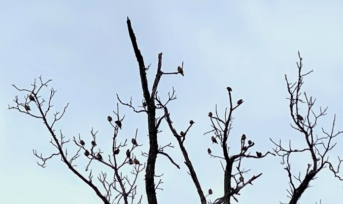 Birds in Tree Crop